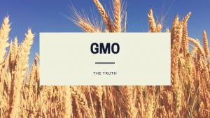 GMO Field of wheat